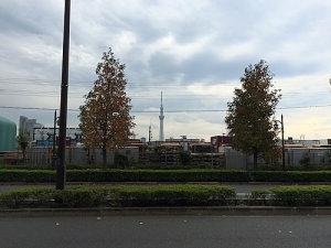 東京スカイツリーも見えます
