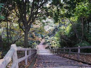 金沢自然公園(しだの谷)