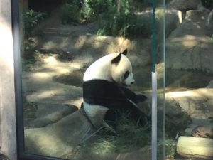 パンダはお食事中